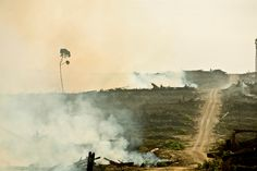 https://flic.kr/p/9sB7iJ | Cargill's Problems With Palm Oil | This photo is from…