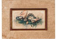 """1940s Framed Print, Seashells; 10""""L x 13""""W."""