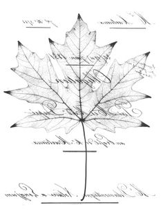 Leaf print and lettering reverse