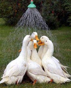 Ihnen fallen die verrücktesten Ideen unter der Dusche ein....und dieses Teilen fällt ihnen sehr leicht, wie du siehst!