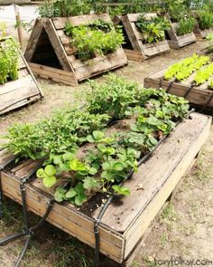 pallet garden Look what FoxyFolksy found in our recent trip to CaSavio, Italy. A pallet garden, but this one is one of the most interesting we have ever seen! Organized, creative, with automatic watering system! Who said you need agarden or ground to Small Vegetable Gardens, Vegetable Garden For Beginners, Gardening For Beginners, Terraced Vegetable Garden, Small Gardens, Vegetable Gardening, Diy Gardening, Organic Gardening, Container Gardening