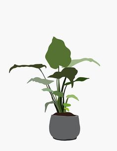 Items similar to minimal tropical plant illustration art print. leafy green botanical plant in a concrete vase on Etsy – Best Garden Plants And Planting People Illustration, Plant Illustration, Graphic Illustration, Photoshop Projects, Photoshop Design, Collage Architecture, Office Deco, Art Minimaliste, Arte Floral