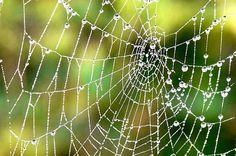 http://www.ecochunk.com/wp-content/uploads/2012/10/Spider-Silk.jpg