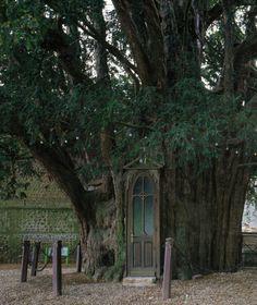A chapel built in a yew trunk in La Haye-de-Routot, France