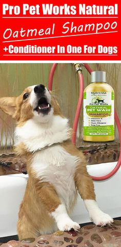 Our Oatmeal Dog Shampoo And Conditioner is recommended by Vets and Specially formulated for pets with allergies to food, grass and flea bites. Oatmeal Shampoo, Cat Shampoo, Shampoo And Conditioner, Dog Smells, Natural Vitamin E, Flea Treatment, Dog Eyes, Aloe Vera Gel, Non Alcoholic