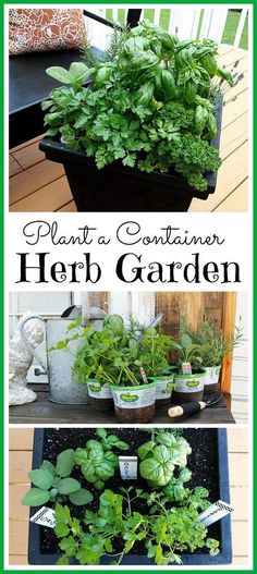 Herbs Gardening 6 Great tips for planting a container herb garden. This is a great idea for patios, decks, and balconies! - You can grow herbs no matter how much space you have! Here are my tips for planting a container herb garden. Container Herb Garden, Garden Plants, Indoor Plants, Garden Web, Patio Plants, Herb Garden Planter, Shade Garden, House Plants, Planting A Garden