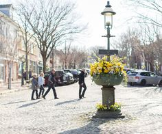 Cobblestoned Main Street on Nantucket decorated with yellow blooms.