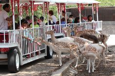 Wonder World Cave and Wildlife Park   Affordable family fun in San Marcos, TX