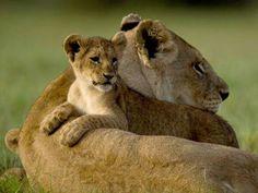 In Sicherheit bei Mama