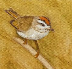 The common firecrest (Regulus ignicapilla)