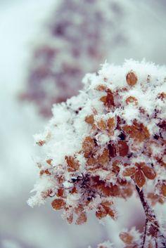 Winter in Uusikaupunki Dandelion, Frozen, Sky, Winter, Flowers, Plants, Heaven, Winter Time, Dandelions