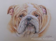 Buldog portrait, pastel drawing on request by Canis Art Studio #dog #bulldog #pastel #drawing  #petportraits #home #design #doglovers #canisartstudio