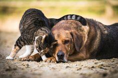 Kerstin Pinnen Photodesign | Tiere Tier Fotos, Kangaroo, Dogs, Design, Animals, Archive, Pet Dogs, Animales, Baby Bjorn