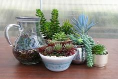 What is Your Succulent Style?