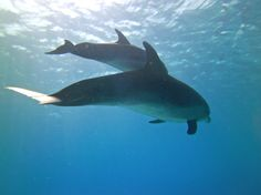 A pod of 30 plus Dolphins swam by. Best dive ever!!!!