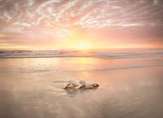 Beach maternity | Perth Maternity Photography