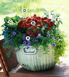 Fall container gardens can be any color. Mix your favorites for a look that suits you. Here, a deep red mum makes a great contrast for a blue calibrachoa in a galvanized container.  A. Calibrachoa 'Cabaret Purple': 2  B. Chrysanthemum 'Brandi': 1  C. Flowering kale (Brassica 'Osaka Purple'): 1  D. Fountaingrass (Pennisetum 'Hameln'): 1  E. Sage (Salvia officinalis): 1