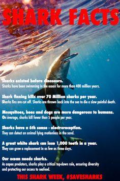 FUCK YEAH SHARKS