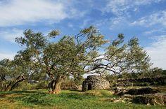 Dalmatian hinterland- rich history destination