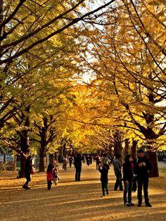 #Showakinen #Tokyo #Japan #Fall2014