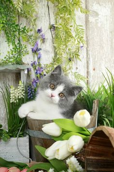 Cat Care Top Tips And Advice. All these things you get as a cat owner. Puppies And Kitties, Cute Cats And Kittens, Baby Cats, Kittens Cutest, Cute Funny Animals, Cute Baby Animals, Animals And Pets, Pretty Cats, Beautiful Cats