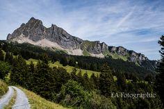 Gonzen ( Schweiz) Mount Rainier, Mountains, Nature, Travel, Heaven, Switzerland, Voyage, Viajes, Traveling
