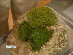 Gardening expert Bill Cullina joins Martha to demonstrate how to plant moss. for in between my beautiful rock path