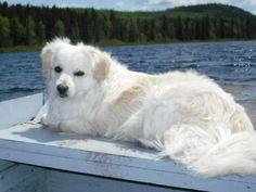 enjoying some sun at the lake