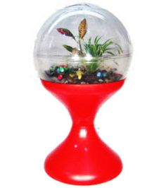 terrarium I had one of these. What a great memory