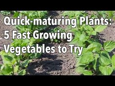 ▶ Quick-maturing Plants: 5 Fast Growing Vegetables to Try - YouTube