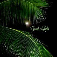 Good Night For Him, Good Morning Beautiful Images, Good Night Prayer, Good Night Friends, Good Night Blessings, Good Night Gif, Good Night Wishes, Good Night Sweet Dreams, Good Night Moon