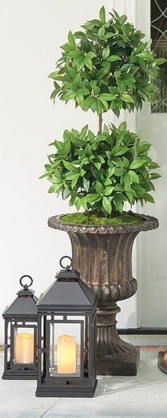 If you are looking for the quintessential, classic planter to add to your garden, terrace, or entryway, look no further than our Tuscany Urns. These all-weather urns have the antique flair of a 19th-century cast-iron urn, but with a fraction of the weight—and the cost. Grand Entrance, Urn, Tuscany, Cast Iron, Indoor Outdoor, 19th Century, Pet Supplies, Terrace, Planters