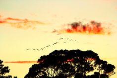 Beautiful dawn - Middelburg Mpumalanga