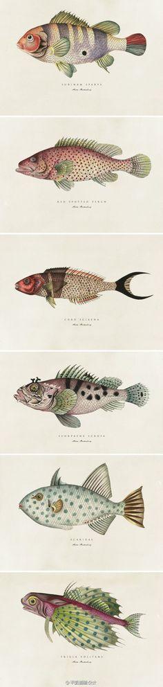 Fish Prints (artist unknown)