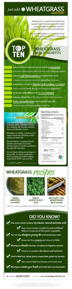 #Wheatgrass #Infographic > Top 10 #health benefits, #nutritional information, recipes and interesting facts and figures about wheatgrass. Full size download available online at http://www.justaddgoodstuff.com/infographic-wheatgrass/