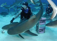 Stuarts Cove!! Shark Feeding!! (My next vacation)