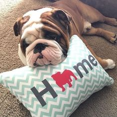 Bulldog Home Pillow. Choose from multiple colors and 50+ dog breeds.