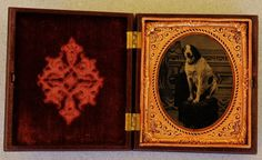 Tintype Hound Dog Photograph In Thermoplastic Case