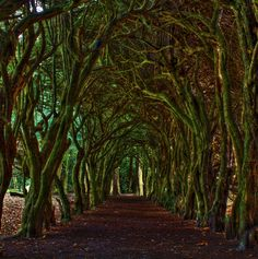 Tree Tunnel  This tree tunnel is located in Goranston College, County Meath.