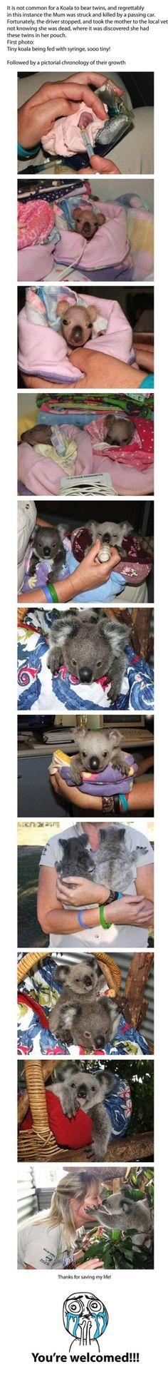 Cute Koala Story