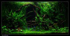 Jacek Debski Photography: Aquarium / Aquariums