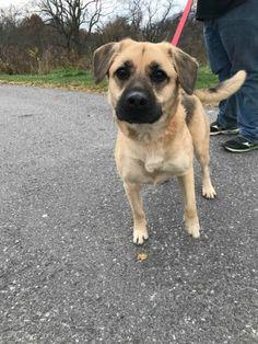 German Shepherd Dog dog for Adoption in Lewisburg, WV. ADN-404694 on PuppyFinder.com Gender: Female. Age: Adult
