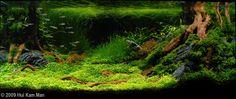 """90 x 45 x 45 cm Title Destiny Plants Elatine triandra Schk. ,Glossostigma elatinoides ,Hemiathus micranthemoides ,Eleocharis acicularis ,Eleocharis minima Kunth ,Lilaeopsis novae zelandia ,Microsorium sp. Narrow ,Rotala pusilla (from Goias) ,Monosoienium tenerum Griff ,Vesicularia sp. ,Hypnum plumaeforme Wil Fish/Animals Petitella georgiae ,Nannostomus nitidus ,Otocinclus macrospilus ,Caridina japonica ,Caridina cf. serrata """"blue tiger"""""""