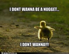 Funny Animal Pictures With Captions ... Forums View topic - Cute Animals That Are Not Dogs Or Cats #cuteanimals