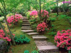 Amazing Garden - Photo