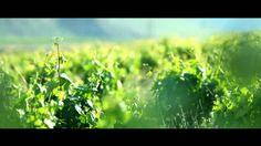 """Campanya turística de La Rioja de l'any 2012. Sota el lema """"La Rioja apetece"""", al vídeo publicitari es potencia clarament la seva popularitat respecte als vins i convida al turista expressament proposant una taula a l'aire lliure per a viure l'experiència gastronòmica i a la vegada natural."""