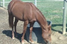 APHA solid wp 2011 filly for sale in Greene, Ohio, United States of America :: HorseClicks