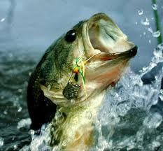 bass-biting