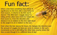 Call Bee Specialists in Bloomfield Hills, MI today at I Love Bees, Birds And The Bees, Bee Facts, Buzzy Bee, Raising Bees, Bee Friendly, Save The Bees, Bee Happy, Bees Knees