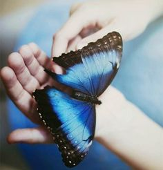 #butterfly #nature #photography